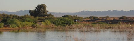 Alamo River Wetlands